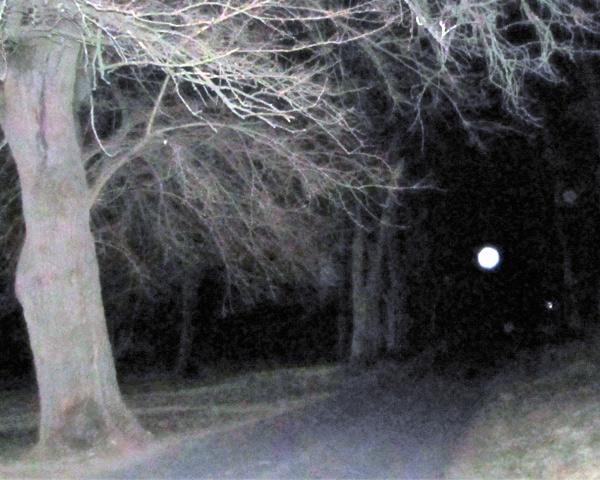 The Old Grove Haunted
